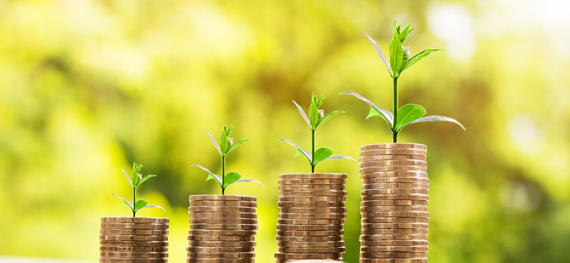 Money Business success growing concept, Trees  on pile of coins
